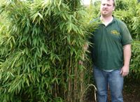 Garden bamboo, grasses and ferns