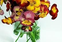Fleurs préférées