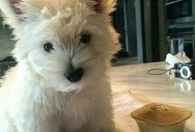 Cuteness / Pets that are so cute you just wanna throw up