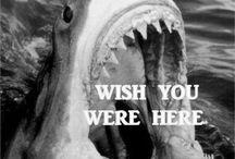 Sharks & Underwater Love