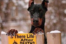 Kalle´s Dog Box