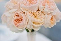 Wedding :-) / Wedding :)