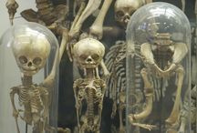 Curiosities / Wunderkammer: A collection of curiosities, oddities, and esoteric items.