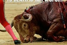 Fight for non-human Animals