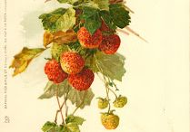 Антикварные открытки Catherine Clein