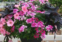 Hængende planter