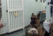 Dog/animal lovers