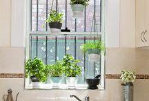 Plants in kichen