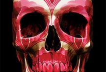 Skullduggery / skulls for crafters