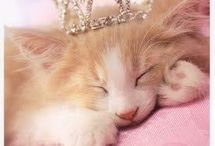 COUNTRYKITTENS * ✿⊱ / I am a tender-hearted person who loves to share. Please feel free to pin from me. May the Lord bless you. / by ♡ Summer Circle ♡