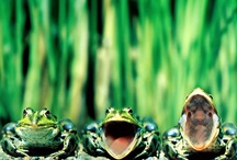 LOVE FROGS!1!!11!!