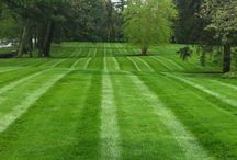 Lush, Green Lawns / There's a special beauty in healthy, lush lawns with crisp cuts!
