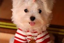 Dogs / All the cutest dogs
