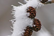 Winter #1 / When the temperature drops! / by Judith Hindall