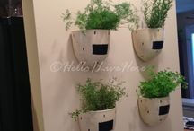 Indoor Herb Gardens / by Hello I Live Here