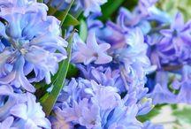 Inspo | Spring