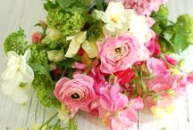 Season -SUMMER / The variety of blooms and textures available for a Summer Wedding - from the informality of daisies, stock and cosmos to perfectly formed roses, spire like delphinium and the delicate sweet pea. Foliage such as jasmine or clematis adds softness and femininity while clusters of fluffy lime green Alchemilla Mollis set off the pallet .