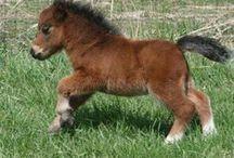 Minik atlar