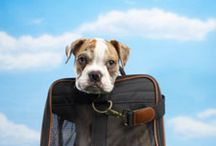 Travel with Pets / We know how important it is to have the whole family come along for the journey. So here are some tips that will make travelling with your pet easier and more memorable. For more pet travel tips visit: http://www.bestwestern.com/travel-planning/tips/traveling-with-pets.asp  / by Best Western