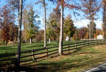 FenRidge Farm / Images from my own horse farm here in Mebane, NC
