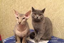 Ludmila / Мои кошки!))