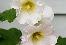 Fleurs & déco de mon jardin JPH / Jardin