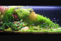 aquarium.inspiratie