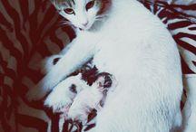 kedimiz doğurdu. :)
