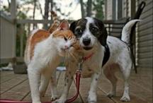 Kediler ve Kopekler