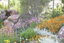 gardening steep, rocky gardens
