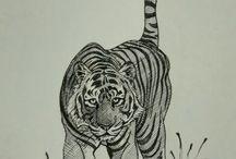 royal Bengal sketches
