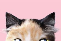 iPhone wallpapper cats