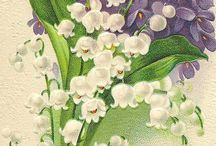 lily of the valy