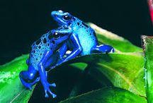 Beautiful Frogs