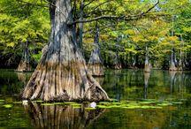 Louisiana Destinations