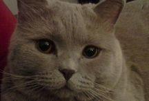 Мой Кот.