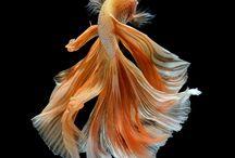 фото рыб
