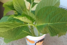 Gardening n Yard Art / plants , tips ,yard art ideas / by Karla Marr
