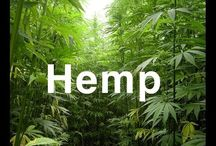 hempseed marijuana cannabis