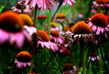 Garden and Nature / by Cindy Hall