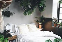 room decor and house plants