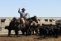 cowboys and ranches