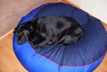 Labradors / Labrodaors on their dog beds