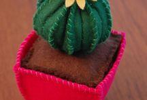 Cactus n_n