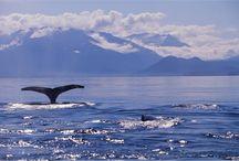Alaskan cruise / by Sharon Jorgenson