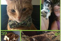 2017 Tomlyn I Love My Pet Photo Sweepstakes Winners! / Congratulations to the lucky winners of our Tomlyn I Love My Pet Photo Sweepstakes! We enjoyed seeing every photo of your fur babies and hearing all the wonderful and unique reasons why you love each of them.  Didn't win? You may still see your pet entry on our website or social channels in the coming months, so stay tuned and stay connected to Tomlyn for fun and other giveaways, too! www.Tomlyn.com www.facebook.com/TomlynPets www.instagram.com/TomlynPets #TomlynLovesPets