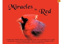 Cardinal's Miracle's in Red are everywhere... / Our book, Miracles in Red: is our testimony of how God shows His love in mysterious ways, even with the sweet animals, in our case sweet cardinals, He is always a present help for everyone's time of need.  Published by Thomas Nelson inc.  / by Cathy and Walter Hopper