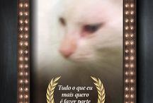 Amigo Animal 2016