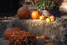 Fall yards Holiday Decor / by Tammy Stephan Monger