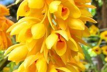 orquideas / orquideas diversas